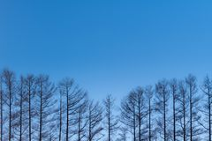 Sept colline douce en hiver, Biei, Hokkaido, Japon Photographie stock