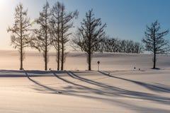 Sept colline douce en hiver, Biei, Hokkaido, Japon images libres de droits