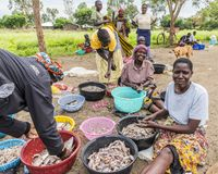 2017 Sept 7 Fishing Village, Kenya. African women sorting the morning fishing catch. Lake Victoria, Kisumu County, Africa. Small group of friendly African women royalty free stock photos