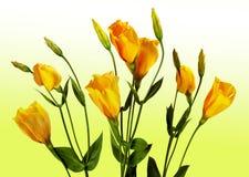 Sept fleurs jaunes sur un fond jaune Images stock