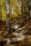 Sept lacs - Yedigoller de Bolu Turquie photos stock