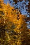 Sept lacs - Yedigoller de Bolu Turquie photographie stock libre de droits