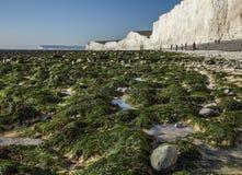 Sept soeurs, East Sussex, Angleterre - algue verte et falaises blanches image stock