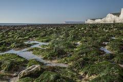 Sept soeurs, East Sussex, Angleterre - algue verte et falaises blanches un jour ensoleillé image libre de droits