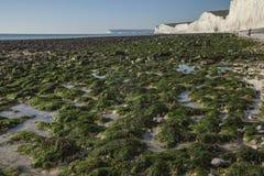 Sept soeurs, East Sussex, Angleterre, le BRITANNIQUE - algue verte sur le rivage photos libres de droits