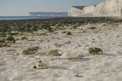 Sept soeurs, East Sussex, Angleterre ; plage blanche, algues vertes sur la plage photographie stock libre de droits