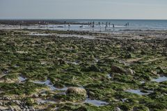 Sept soeurs, East Sussex, Angleterre ; plage verte photographie stock