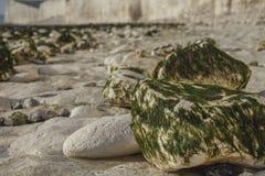 Sept soeurs, East Sussex, Angleterre, R-U ; plage blanche, algues vertes photo libre de droits