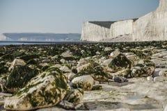 Sept soeurs, East Sussex ; plage blanche, algues vertes photographie stock