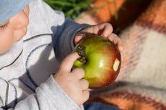 September-Apfel in den kleinen Händen Lizenzfreie Stockbilder