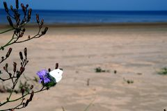 September butterfly. Riga gulf near Lielupe river mouth on September royalty free stock photo