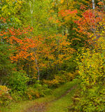 September Colors. In the North Woods of Minnesota Stock Images