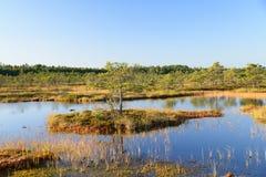 September-de achtergrond van het middagmoeras van Kakerdaja, Estlandse aard Royalty-vrije Stock Foto's