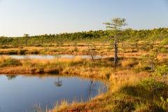 September-de achtergrond van het middagmoeras van Kakerdaja, Estlandse aard Stock Foto's