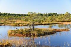 September-de achtergrond van het middagmoeras van Kakerdaja, Estlandse aard Stock Afbeeldingen