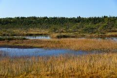 September-de achtergrond van het middagmoeras van Kakerdaja, Estlandse aard Stock Afbeelding