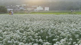 September in de herfst vóór de mooie Daxi-preibloemen Royalty-vrije Stock Afbeeldingen