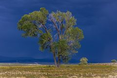Dramatic view of tree and storm clouds near Norwood Colorado nea. September 14, 2017 - Dramatic view of tree and storm clouds near Norwood Colorado near the Royalty Free Stock Images
