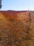 September-Ernte in Polen Stockbild