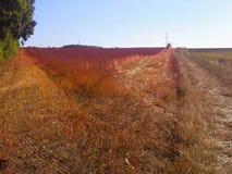 September-Ernte in Polen Lizenzfreies Stockbild