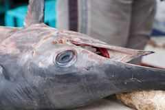 september för kefalonia för argostolihamnhuvud swordfish 2006 Royaltyfri Fotografi