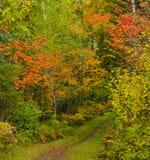 September-Farben Stockbilder