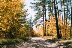 September forest color road with blue sky. stock photography