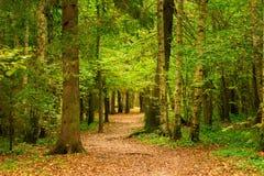 September höstlandskap i skogen, träd royaltyfria bilder