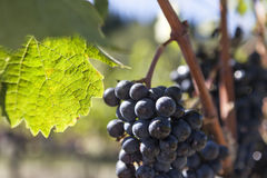 September i Toscana Arkivbild