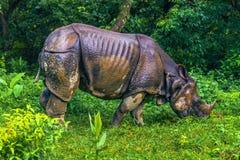02 september, 2014 - Indische Rinoceros in het Nationale Park van Chitwan, Nepa Stock Foto