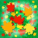1 September. Knowledge Day in Russia. Maple leaves, Green background. Bright design for posters and banners. 1 September. Knowledge Day in Russia. Concept of a royalty free illustration