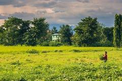 2. September 2014 - Landwirt in Sauraha, Nepal Stockfotografie