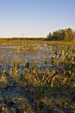September marsh Stock Image