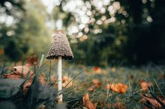September Mushrooms in Wisconsin stock photo