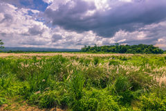 03 september, 2014 - Panorama van het Nationale Park van Chitwan, Nepal Royalty-vrije Stock Afbeelding
