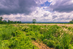 03 september, 2014 - Panorama van het Nationale Park van Chitwan, Nepal Stock Fotografie
