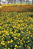 September's flower. Stock Photos