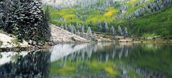 September Snow. Snow covered trees reflecting in Maroon Lake in the White River National Forest in Colorado Royalty Free Stock Images