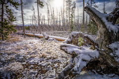 September Snow in Yellowstone Royalty Free Stock Image
