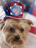 September 11th Patriotic Dog. Yorkie looks into camera with red top hat and graphic in memory of September 11th stock photos