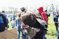 16 september, 2017, Tula, Rusland - Historisch Festival` Kulikovo Gebied `: adelaarszitting op valkerijhandschoen Stock Foto's