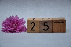25 September on wooden blocks with a pink daisy stock image