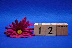 12 September on wooden blocks with a purple daisy. On a blue background royalty free stock images