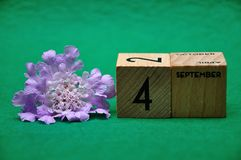 4 September on wooden blocks with a purple flower. On a green background royalty free stock images