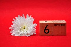 6 September on wooden blocks with a white daisy. On a red background royalty free stock photos