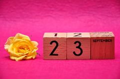 23 September on wooden blocks with a yellow rose royalty free stock images