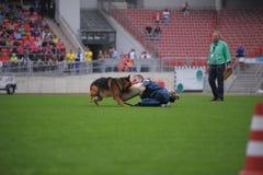 7 septembre 2014 épreuve d'aptitude fonctionnante de Nurnberg sur le plus grand Allemand elle Photo stock