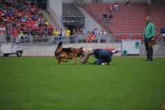 7 septembre 2014 épreuve d'aptitude fonctionnante de Nurnberg sur le plus grand Allemand elle Photos stock