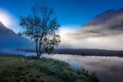 2 septembre 2016 - arbre solitaire avec le brouillard de matin vu sur le lac tern, péninsule de Kenai, Alaska Image libre de droits