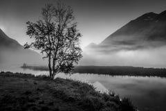2 septembre 2016 - arbre solitaire avec le brouillard de matin vu sur le lac tern, péninsule de Kenai, Alaska Image stock